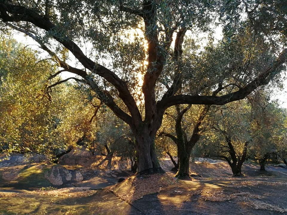 Korfu, az Istenek kertje